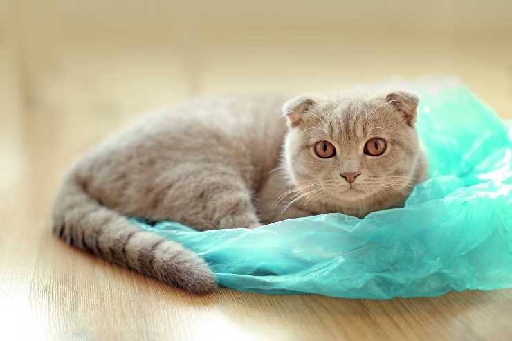 gatto plastica