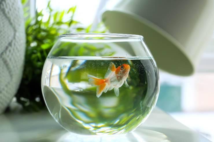 pericoli del cloro per i pesci
