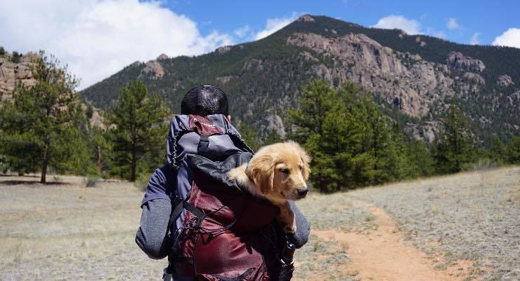 Cane in viaggio con il padrone