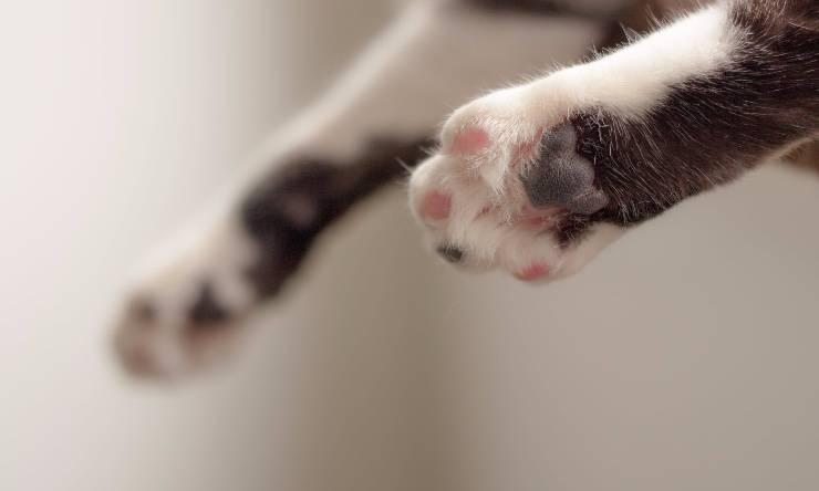 particolare di zampa di gatto