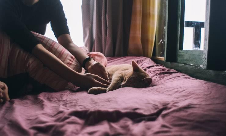 Gatto e padrone sul letto