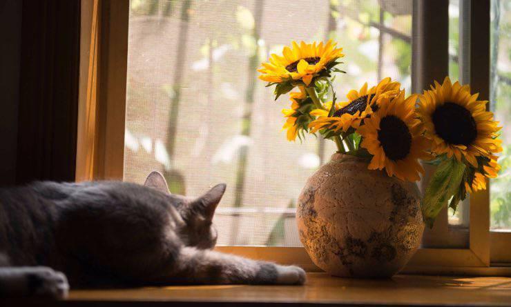 Gatto stanco che guarda fuori dalla finestra
