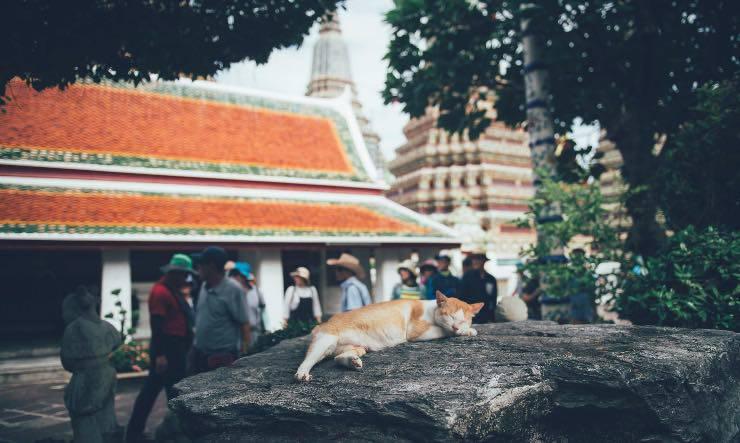 gatto davanti ad un tempio