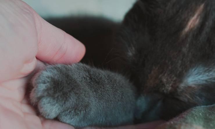 Padrone che prende zampa al suo gatto