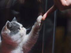 gatto che gioca con padrone