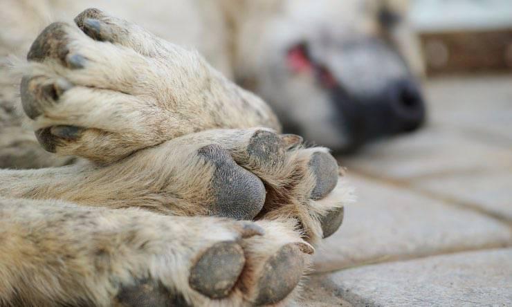 Particolare delle zampe di un cane