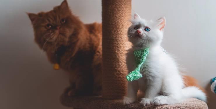 Gatti con i loro tiragraffi
