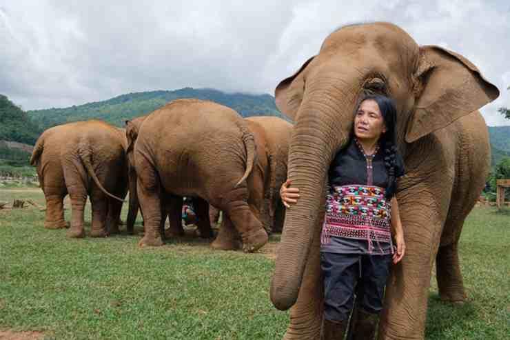 Lek, la sussurratrice di elefanti (foto Pixabay)