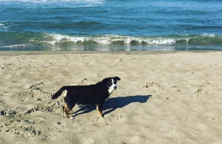 Il cane di Flavia Vento