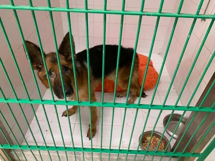 Pulce il cane chiuso da 3 anni in un ripostiglio