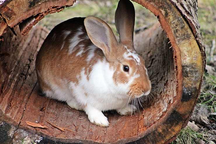 Coniglio nel tronco