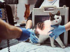 radiografia al gatto