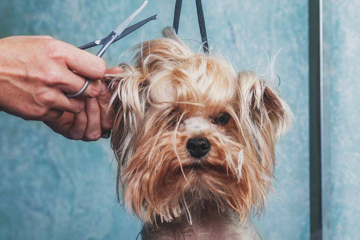 azze di cani a pelo lungo