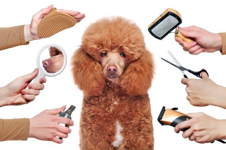 razze di cani a pelo lungo