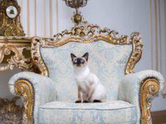 azze di gatti più costose
