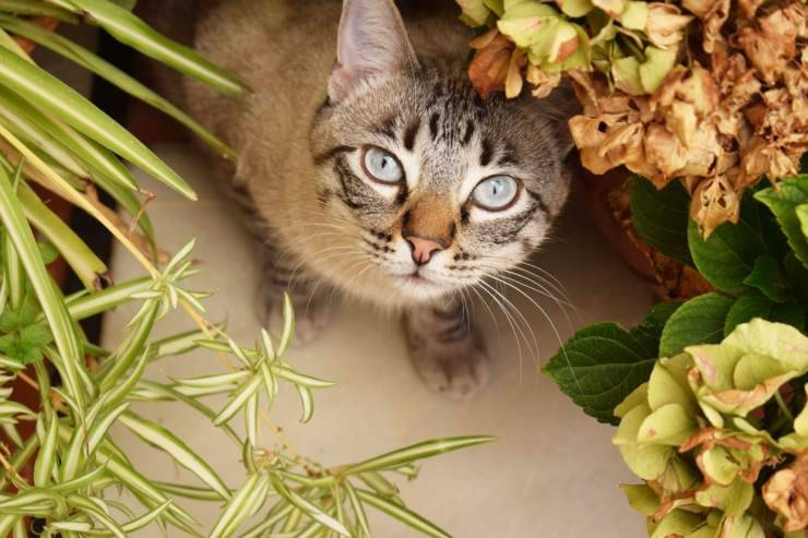 gatto piante