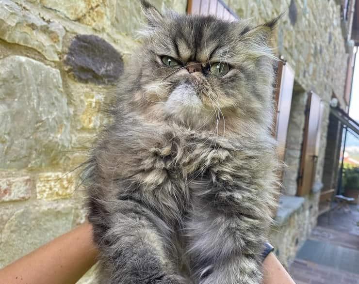 Saba Miao il gatto di Aurora Ramazzotti
