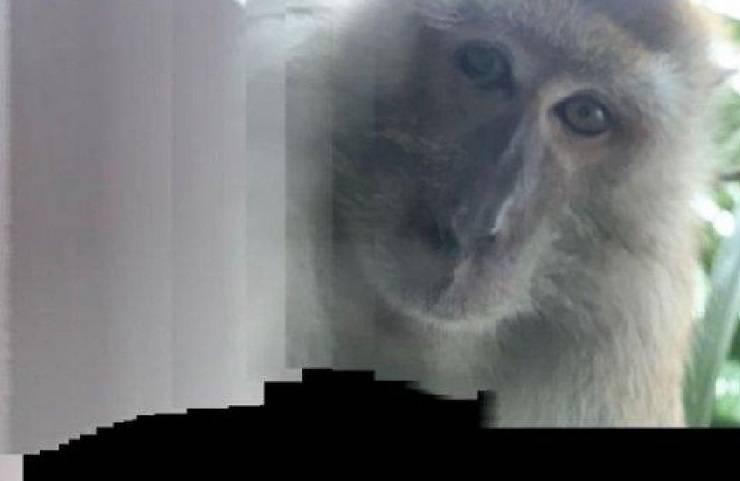scimmia scatta selfie