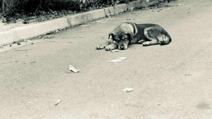 Cane lasciato solo (Foto Pixabay)