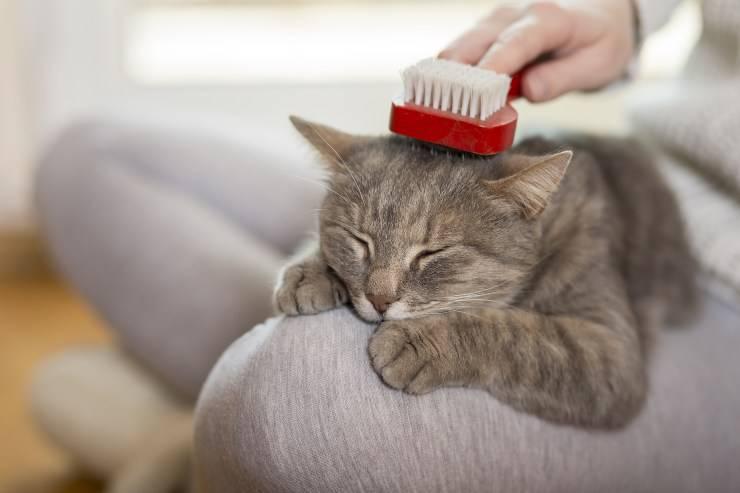 spazzolare il gatto
