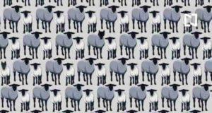 test intelligenza trova i sei lupi nascosti