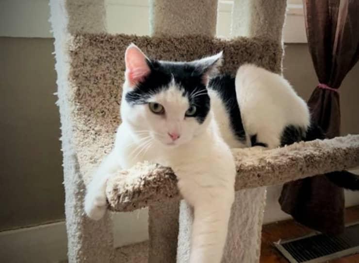 Tommy il gatto che nessuno vuole adottare