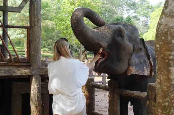Elefante (foto Pixabay)