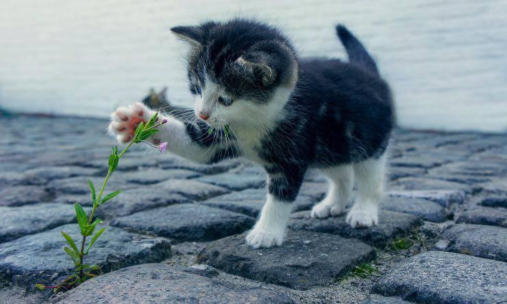 Gatto che da una zampata ad un fiore
