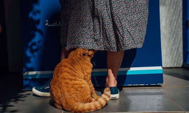 gatto sotto la gonna della sua padrone