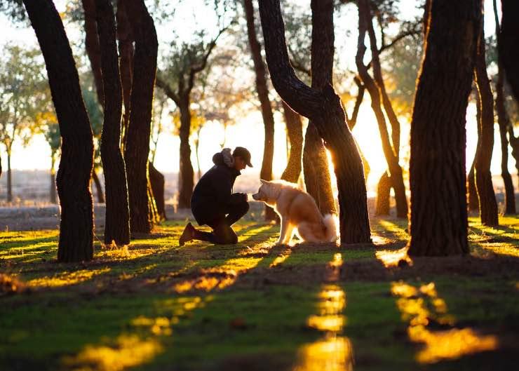 cane e uomo insieme