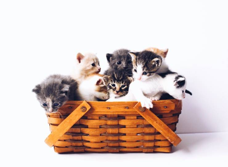 Una cesta di gattini