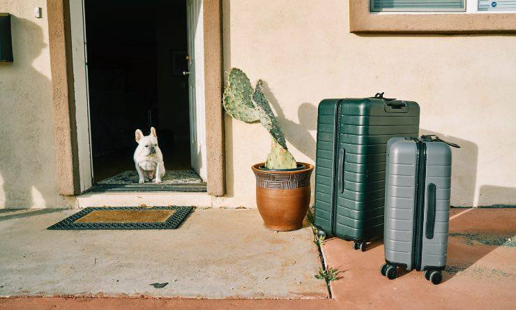 Cane con valigie
