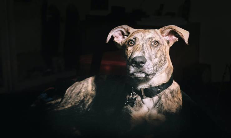Cane nel buio