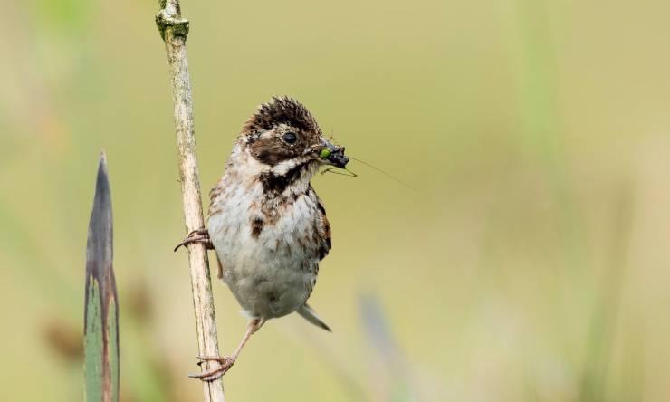 Un uccello insettivoro