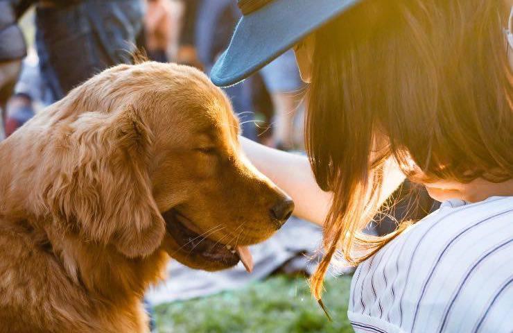 Cane che viene accarezzato dalla sua padrona