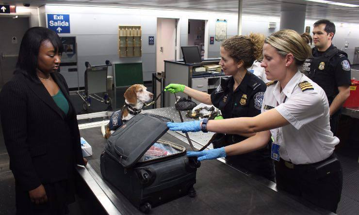Cane anti droga in aeroporto