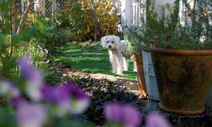 Cane in un giardino