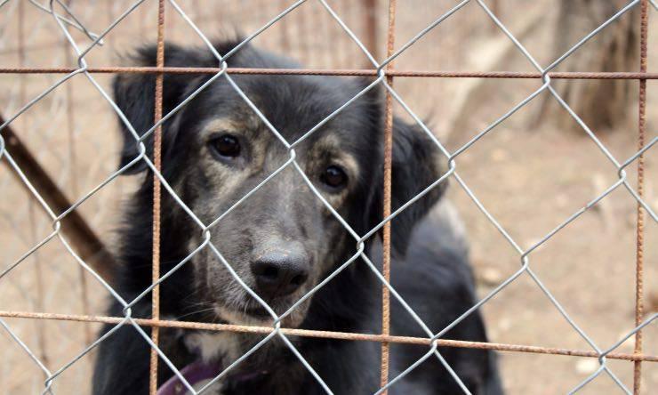 Cane dietro ad una gabbia