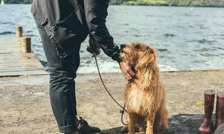 Padrone che accarezza il cane