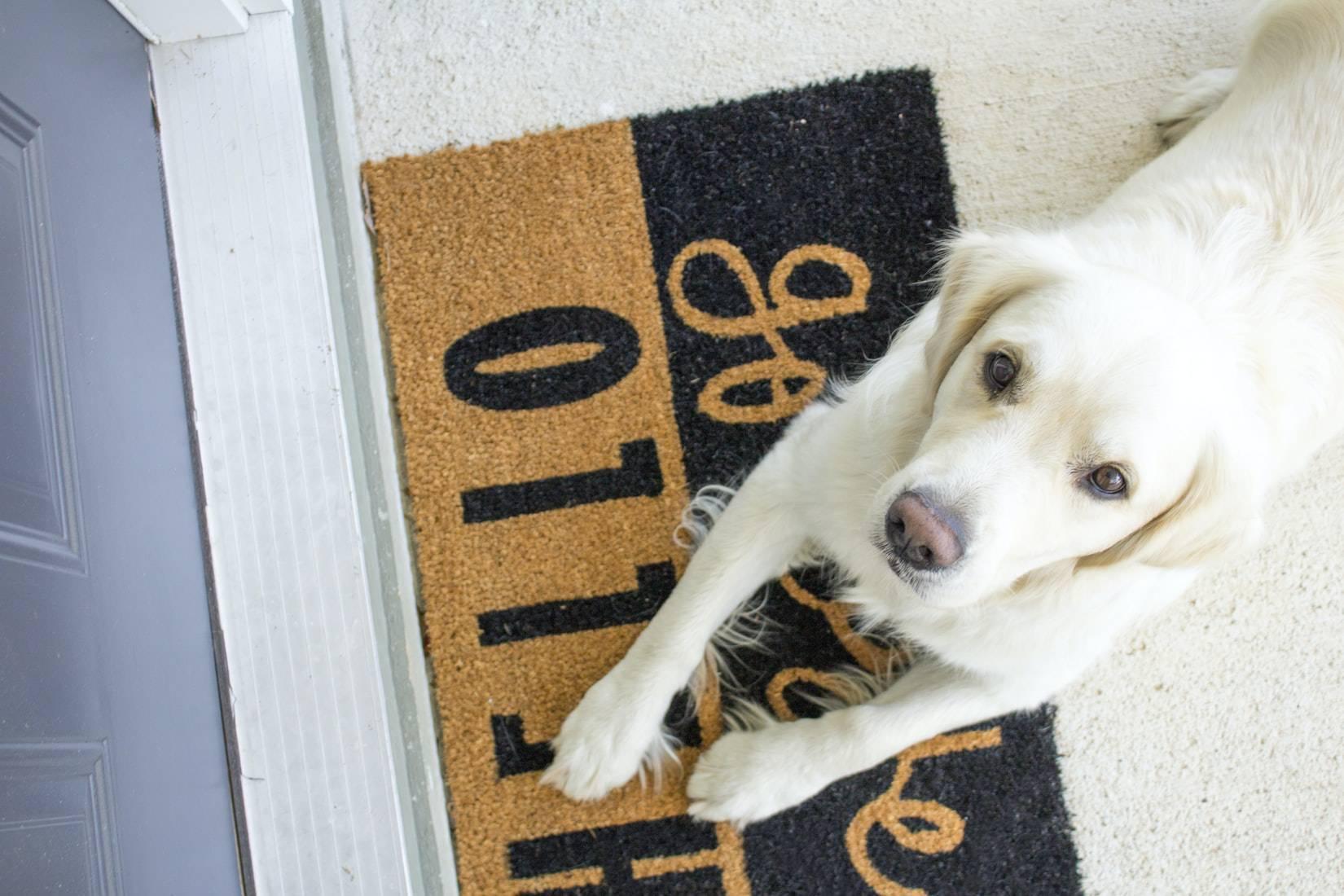 cane sulla porta che ci osserva