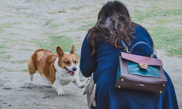 Umano che tenta di approcciare un cane