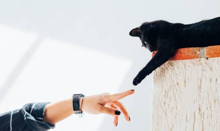 Contatto fra felino e umano