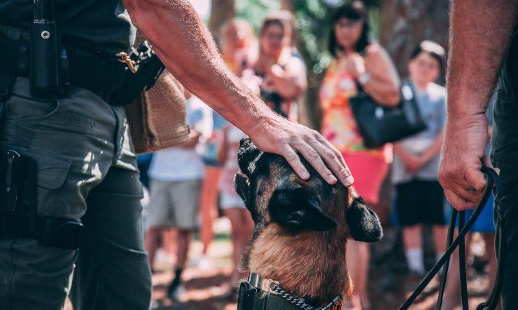 Cane poliziotto pastore tedesco