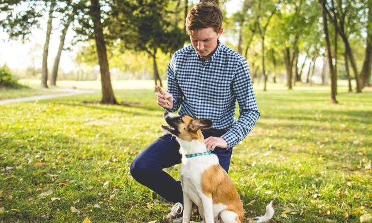 Cane e uomo a passeggio