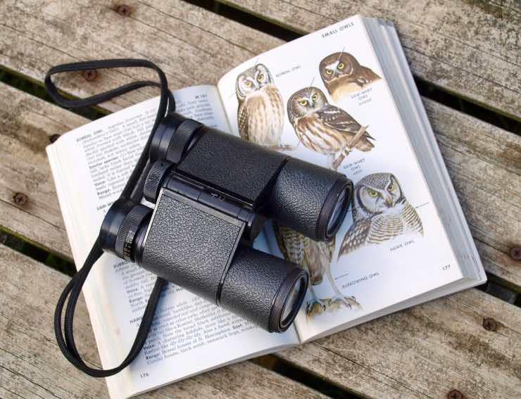 Cannocchiale e guida per identificazione uccelli