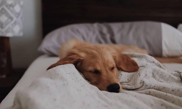 cane su di un letto