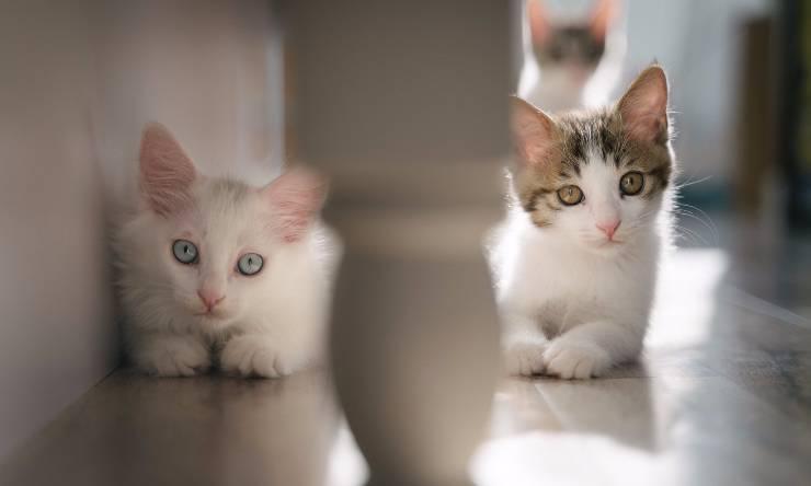Gatti in corridoio