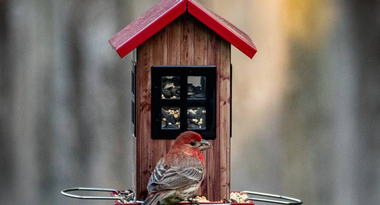 Uccello che si ciba da una mangiatoia
