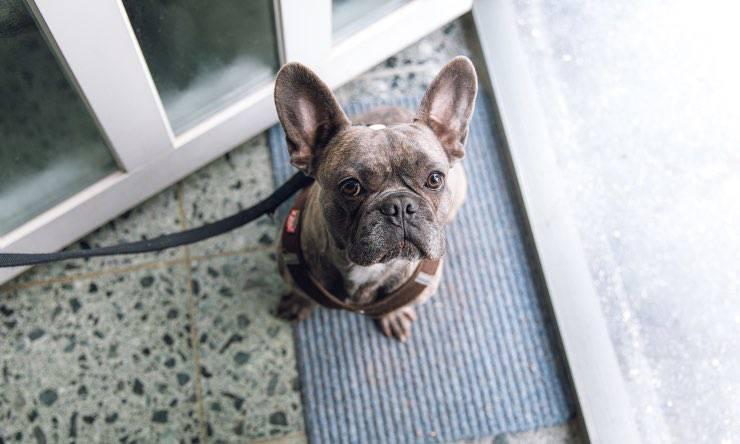 Cane davanti alla porta di casa