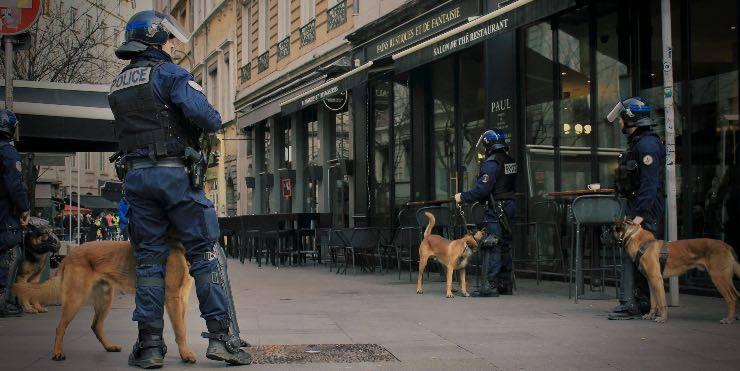 Cani antidroga in città